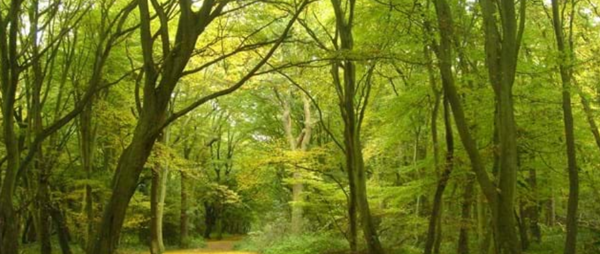Woodland Experience - Male Carers Only